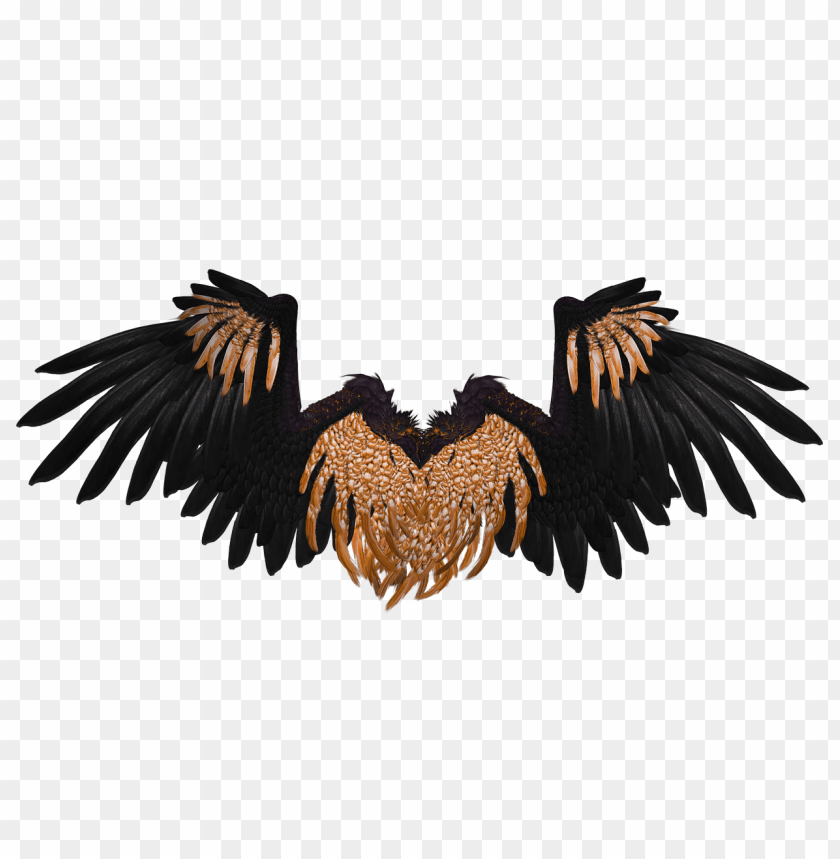 free PNG wings black and brown crow PNG image with transparent background PNG images transparent