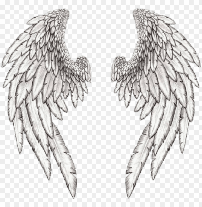 free PNG wings wing angle بال freetoedit - realistic angel wing drawi PNG image with transparent background PNG images transparent