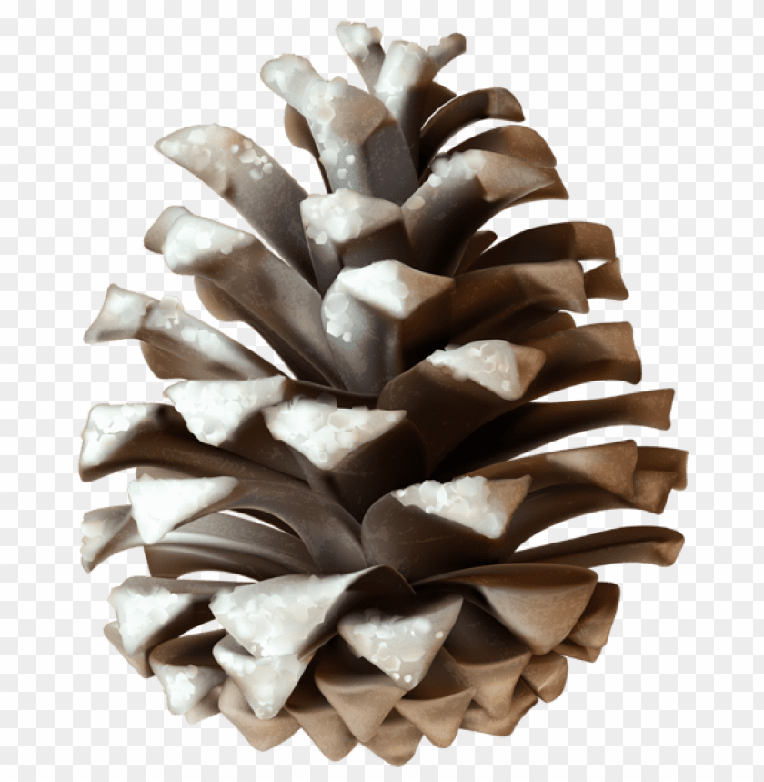 free PNG winter pinecone PNG Images PNG images transparent
