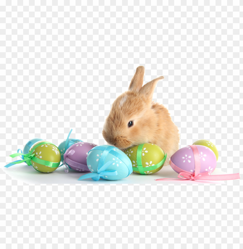 free PNG with eggs transparent marges - easter bunny eggs PNG image with transparent background PNG images transparent