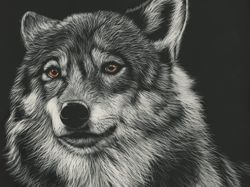 free PNG wolf, drawing, art, predator, head background PNG images transparent