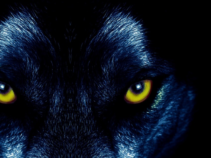 free PNG wolf, eyes, predator, sight background PNG images transparent