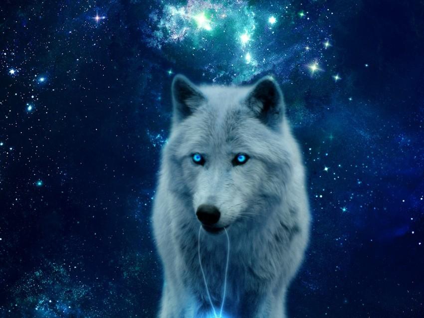 wolf hill glow predator wildlife photoshop 11570148411cok8vlzmqn