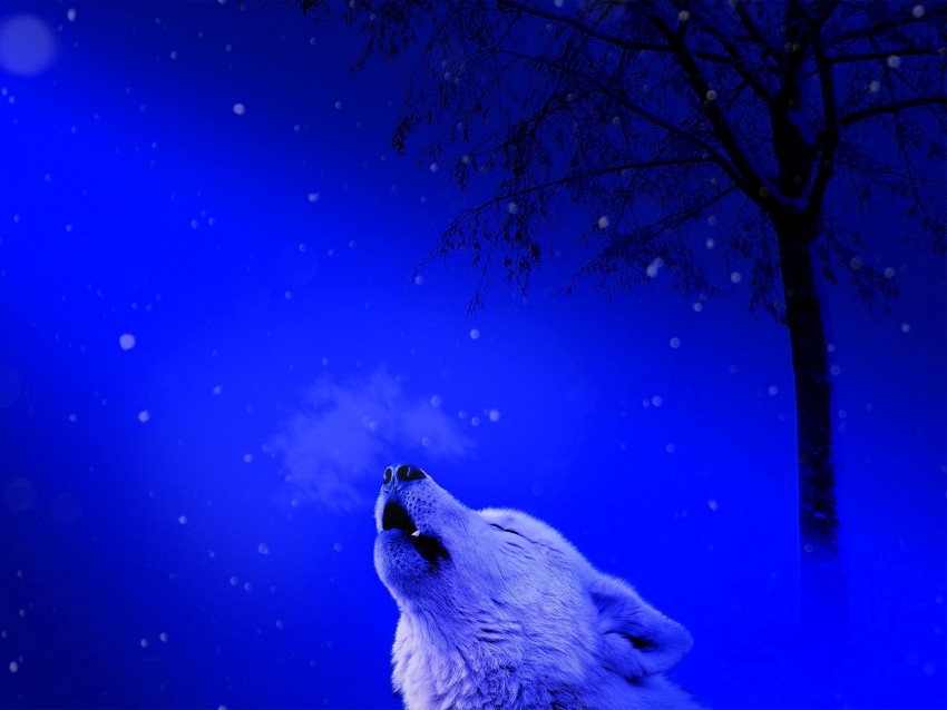 free PNG wolf, howl, loneliness, predator background PNG images transparent