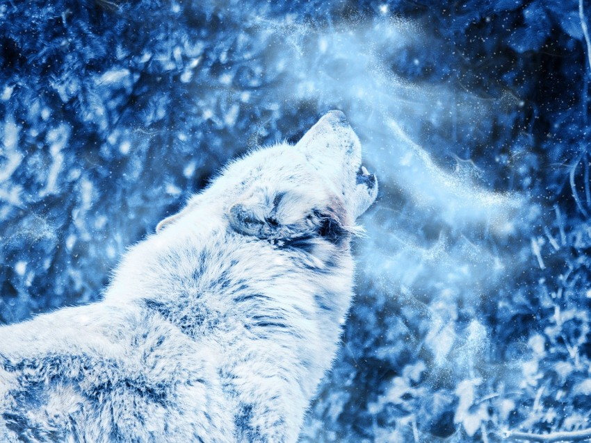 wolf, howl, predator, fog, loneliness background@toppng.com