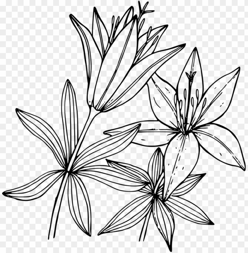 - Wood Lily Flower Coloring Book Floral Design - Lily Coloring Pages PNG  Image With Transparent Background TOPpng