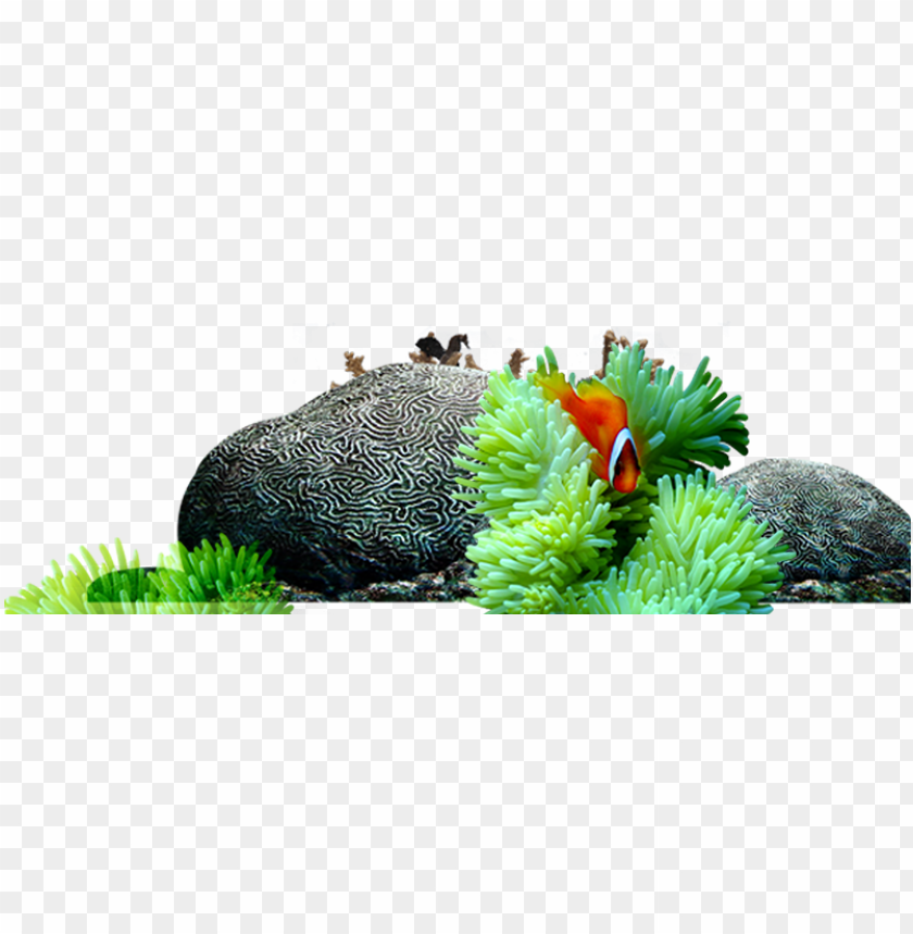 World Reef Fish Submarine Rochas Fundo Do Mar Png Image With