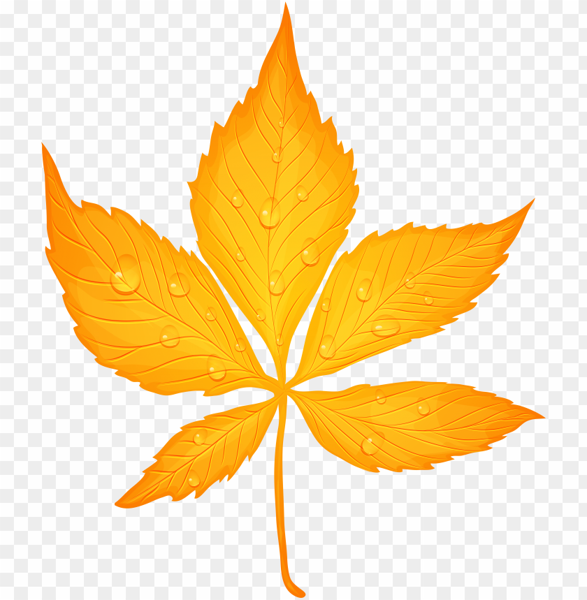 free PNG yellow autumn leaf with dew drops transparent png clip - transparent autumn leaf leaf PNG image with transparent background PNG images transparent