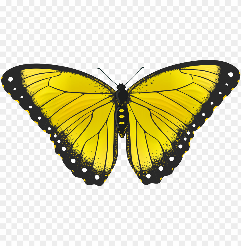 free PNG yellow butterflies clipart butterfly transparent png - yellow butterfly PNG image with transparent background PNG images transparent