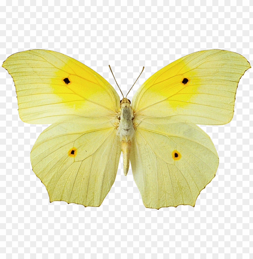 free PNG yellow butterfly hd wallpaper - yellow butterfly png file PNG image with transparent background PNG images transparent