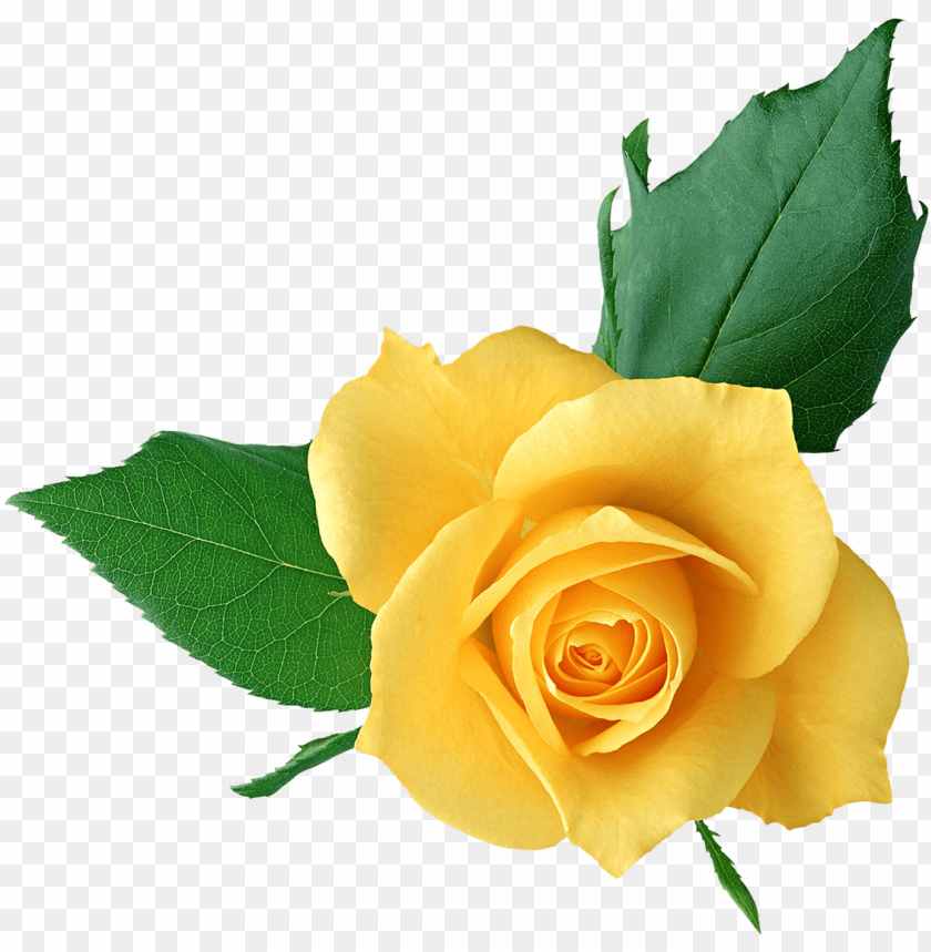 free PNG yellow flower clipart png format - clip art yellow rose PNG image with transparent background PNG images transparent