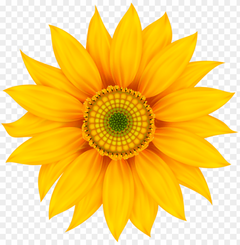 free PNG Download yellow flower transparent png images background PNG images transparent