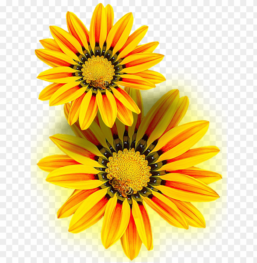 free PNG yellow flower, yellow, png, isolated - yellow i flowers PNG image with transparent background PNG images transparent