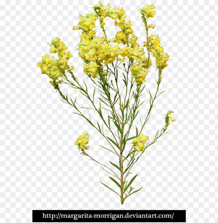 free PNG yellow flowers by margarita-morrigan yellow flowers, - transparent yellow flowers PNG image with transparent background PNG images transparent