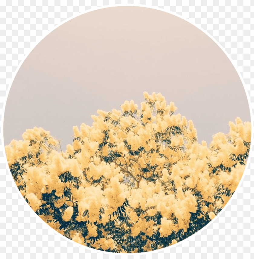 free PNG yellow flowers yellowflowers aesthetic background - light yellow and blue aesthetic PNG image with transparent background PNG images transparent