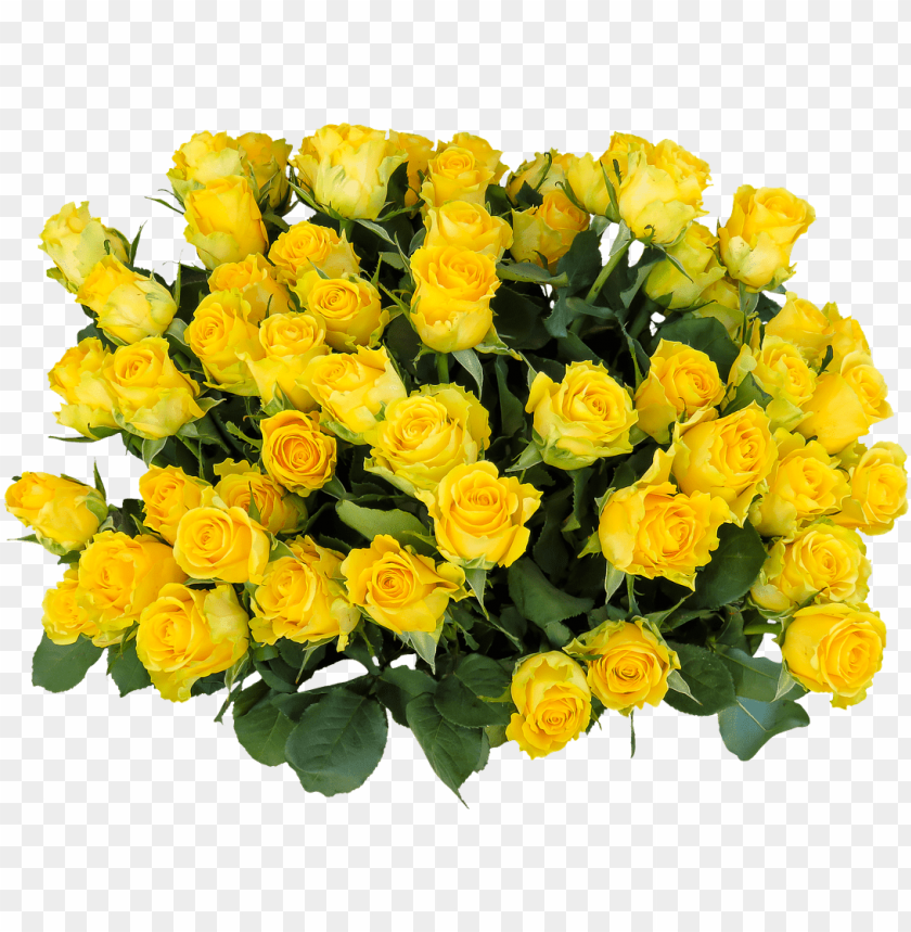 free PNG yellow rose flower free png transparent images free - birthday bouquet images download PNG image with transparent background PNG images transparent