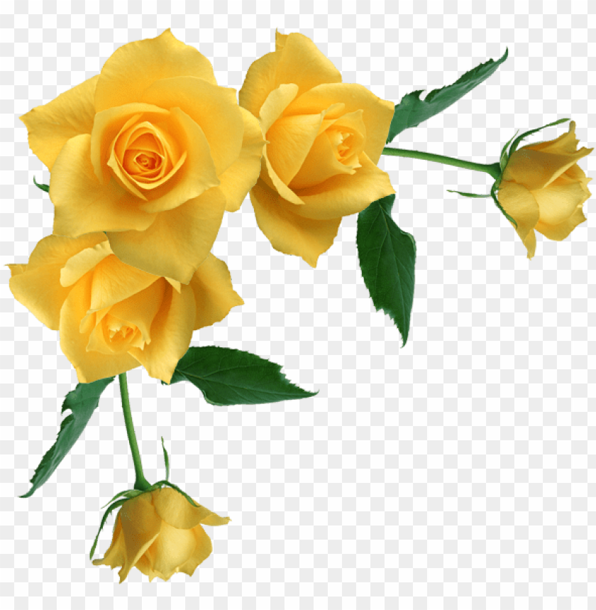 free PNG yellow rose flower free png transparent images free - yellow roses transparent background PNG image with transparent background PNG images transparent