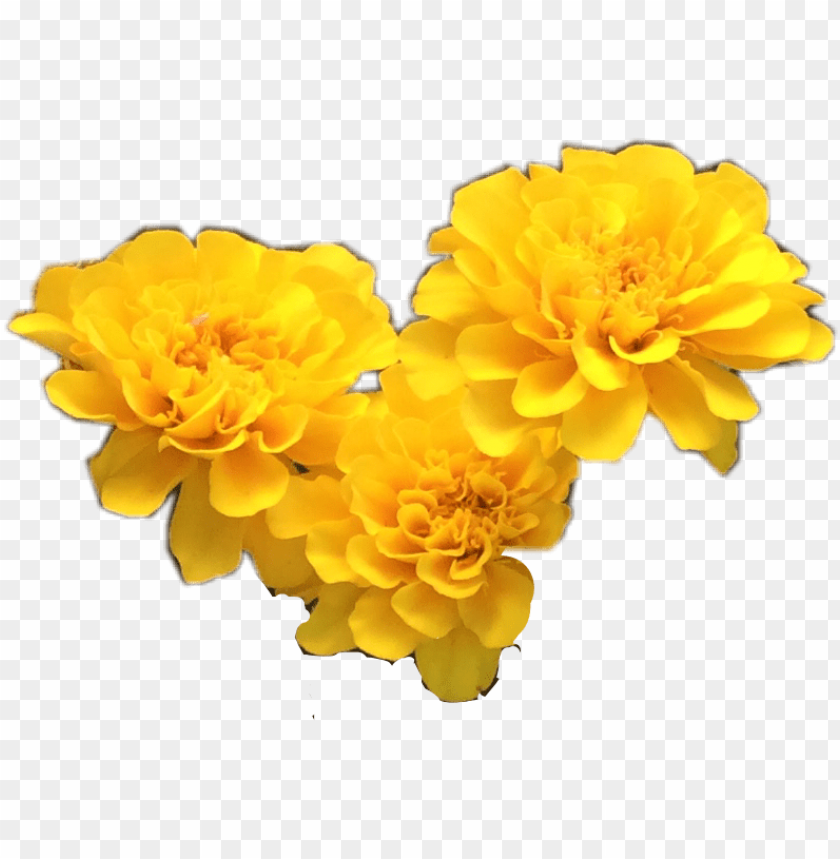 free PNG yellow transparent flower crown download - yellow flowers tumblr transparent PNG image with transparent background PNG images transparent