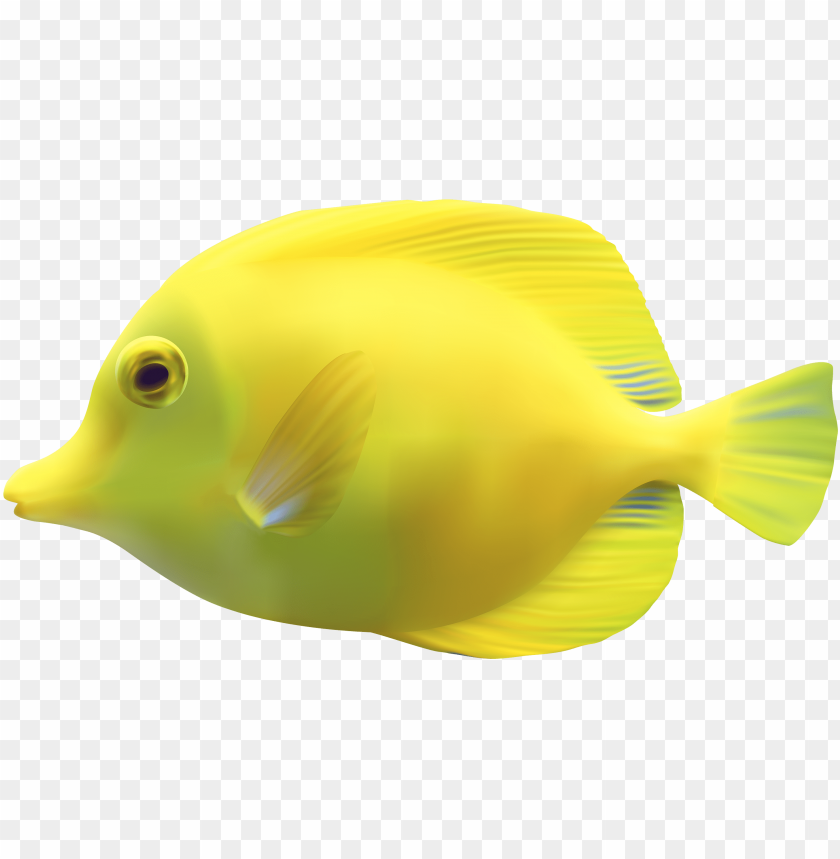 Yellow Zebrasomatang Fish Png Clipart Fish Png Image With Transparent Background Toppng