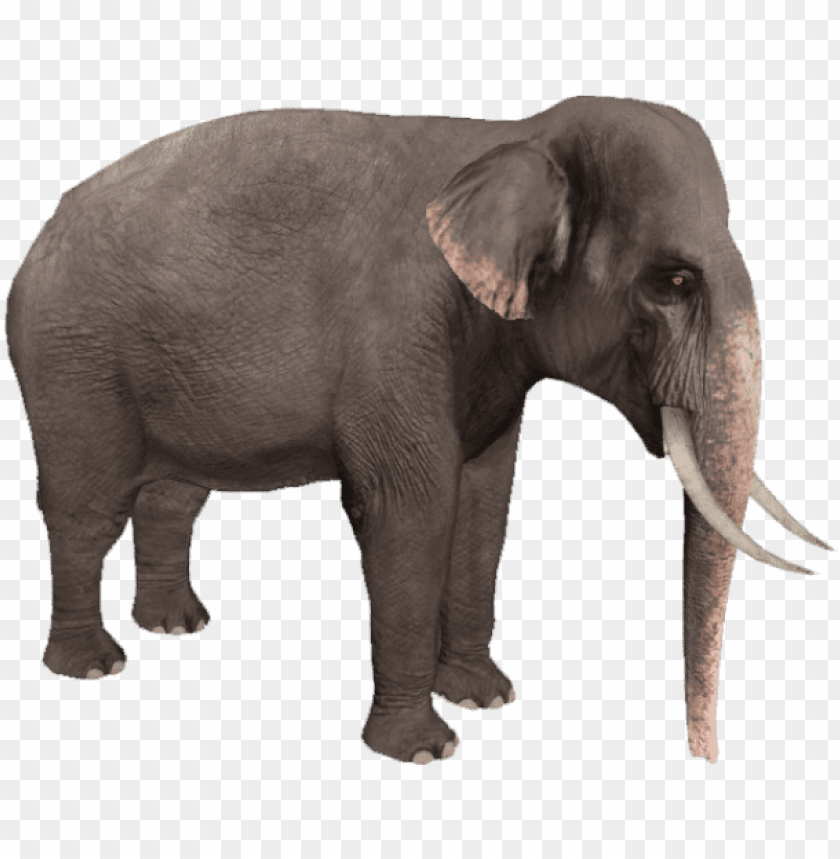 Zoo Tycoon Asian Elephant Png Image With Transparent Background Toppng Animals hd pic with white background. zoo tycoon asian elephant png image