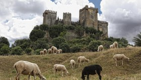 free PNG almodovar castle, andalusia, castle, cordoba, sheep, spain, the castle of almodovar wallpaper background best stock photos PNG images transparent