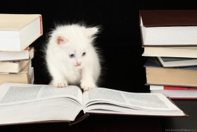 books, books, books, kitten, kitty, kitty, kitty, white smart cat, white smart cat wallpaper background best stock photos@toppng.com