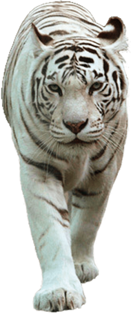 lsu eye of the tiger PNG image with transparent background ...